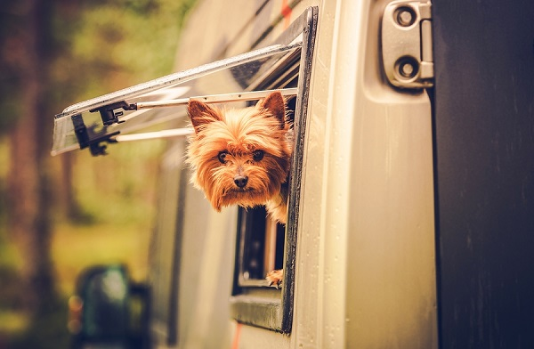 Traveling with Pets - Nohr's RV